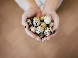 uova di quaglia in mano foto
