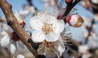 primo piano dei fiori bianchi del fiore foto