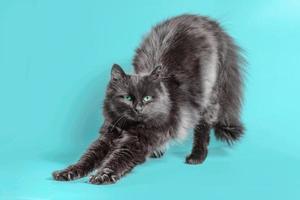 gatto nero che si estende su uno sfondo turchese foto