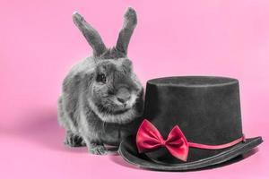 coniglio e cappello foto