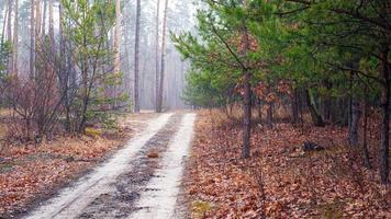 strada in una foresta nebbiosa mattina foto