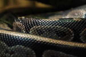 primo piano della pelle di serpente foto