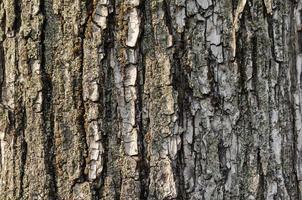 primo piano di struttura della corteccia di albero foto