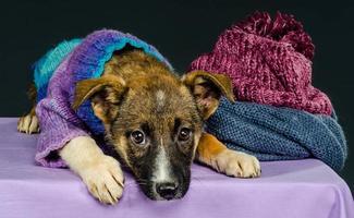 cucciolo con un panno foto