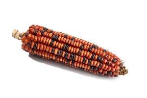 pannocchia di mais rosso isolato su sfondo bianco foto