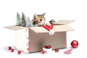 gatto in una scatola con decorazioni natalizie foto