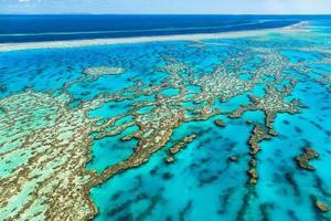 grande barriera corallina nel Queensland in Australia foto