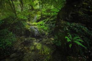 una foresta molto rigogliosa e umida con vegetazione verde e acqua