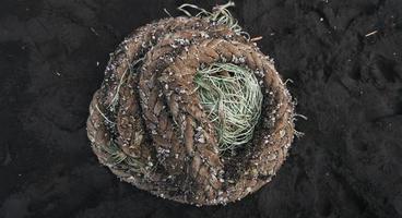 spessa corda della barca arrotolata e abbandonata sulla spiaggia di sabbia scura con cozze attaccate insieme foto