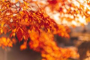 primo piano di foglie rosse e arancioni su un albero