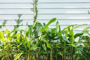 muro bianco e piante foto