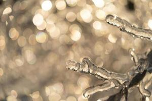 ghiaccioli su un ramo di albero spoglio