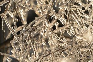 primo piano di ghiaccioli sui rami degli alberi spogli