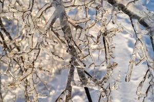 primo piano di ghiaccioli sui rami degli alberi spogli foto