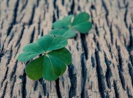 Close-up di foglie di trifoglio su sfondo di legno