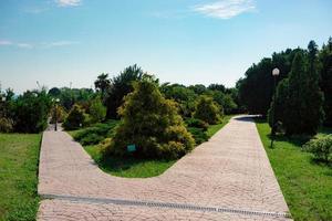 marciapiede in mattoni e alberi con un cielo blu nuvoloso presso il parco delle culture del sud a sochi, russia foto