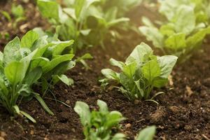 piante ad alto angolo con foglie verdi foto