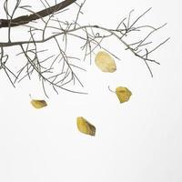 ramo di un albero caduto con foglie secche