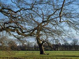 albero nudo invernale foto