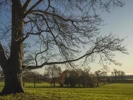 alberi d'inverno in un parco foto