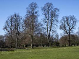 alberi nudi invernali con erba verde foto