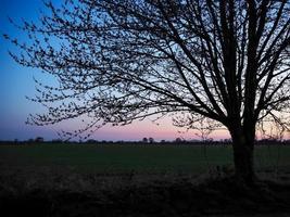 sagoma di un albero al tramonto