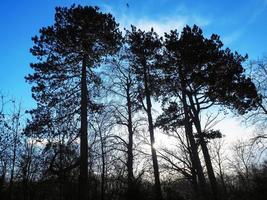 silhouette di alberi con un drammatico cielo blu foto