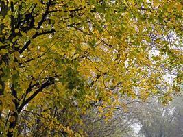 primo piano di un albero con foglie d'autunno foto