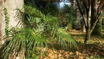 foglie di palma accanto agli alberi e un muro di cemento foto