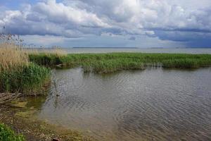 alberi ed erba in un estuario sotto un cielo blu nuvoloso allo spiedo curonian in russia foto