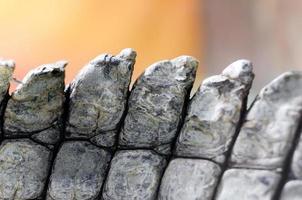 alligatore pelle di coccodrillo dettaglio pattern close up foto