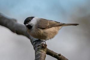 primo piano di un uccello su un ramo foto