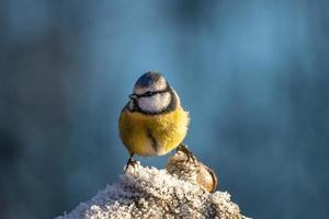 uccello su un ramo di albero gelido