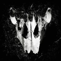 immagine in bianco e nero di un teschio di animale.