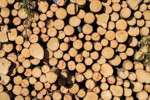 primo piano di una pila di legname in pieno sole foto