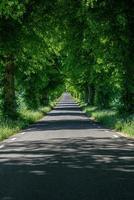 strada con alberi verdi foto
