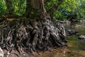 radici di un albero vicino all'acqua foto