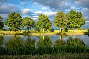 alberi verdi alla luce del sole serale foto