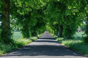 alberi verdi lungo una strada foto