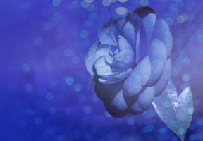 primo piano di un fiore di magnolia blu con uno sfondo sfocato foto
