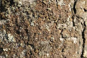 primo piano della corteccia di albero foto