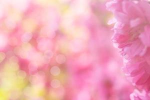 primo piano di un fiore di sakura con sfondo sfocato foto