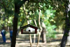 uccello in una mangiatoia su un albero con persone sfocate e alberi sullo sfondo in un parco foto
