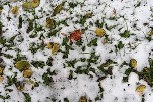 foglie colorate su erba nevosa foto