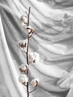 composizione con ramo di fiori di cotone foto