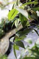 piante in una foresta pluviale tropicale foto