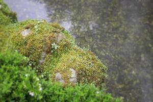 piante tropicali in un giardino foto