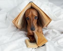 simpatico cane con libri a letto foto