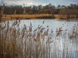 canne accanto a un lago a Potteric Carr, South Yorkshire, Inghilterra foto
