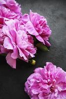 bordo di fiori di peonia su sfondo nero foto